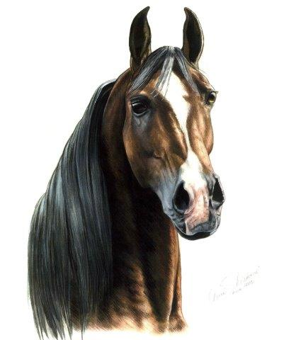 Arabian stallion portrait gouache painting