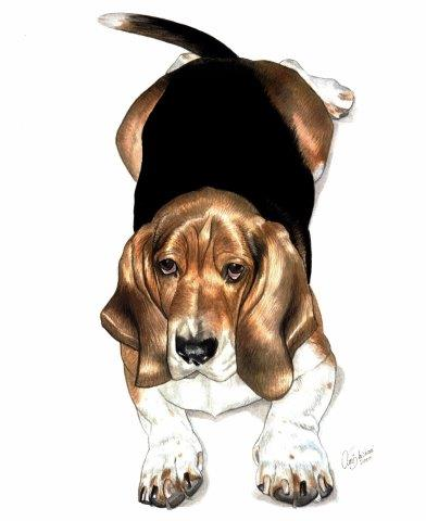 Basset Hound laying down gouache painting