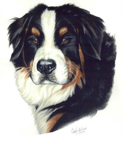 Gouache portrait painting of Bernese Mountain Dog