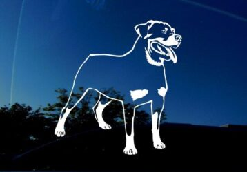 White rottweiler decal for cars, windows, laptops.